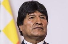 Tòa án Bầu cử tối cao Bolivia thông báo bắt đầu tiến trình bầu cử