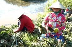 Hậu Giang cần làm gì để đánh thức tiềm năng nông nghiệp xanh