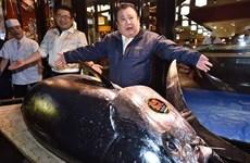 Cá ngừ khổng lồ có giá hàng triệu USD trong phiên đấu giá đầu năm