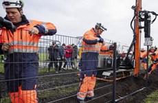 Đan Mạch dựng hàng rào với Đức để bảo vệ ngành xuất khẩu thịt lợn