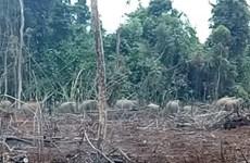 Trang bị thiết bị bay để giám sát đàn voi rừng tại tỉnh Đồng Nai
