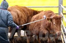 Hàn Quốc tăng cường đối phó với dịch bệnh lở mồm long móng