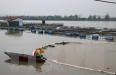 Tràn dầu trên sông Kinh Thầy: Khoảng 85% lượng dầu tràn được thu gom