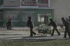 LHQ: Sản xuất lương thực của Triều Tiên gặp nhiều khó khăn