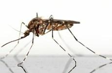 Hãng Bayer giới thiệu thuốc diệt muỗi hỗ trợ chống bệnh sốt rét