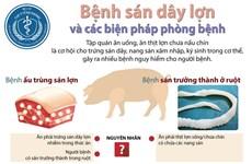 [Infographics] Bệnh sán dây lợn và các biện pháp phòng bệnh