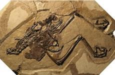 Phát hiện hóa thạch chim cổ đại mang trong mình quả trứng nguyên vẹn