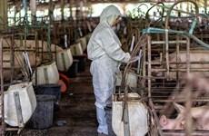 Trung Quốc phân lập thành công chủng virus dịch tả lợn châu Phi ASF