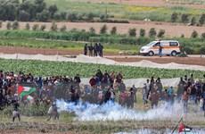 Hàng trăm người Palestine thương vong trong cuộc tuần hành lớn ở Gaza