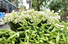 Hà Nội ngập tràn sắc xanh trắng của hoa loa kèn khi tháng Tư về