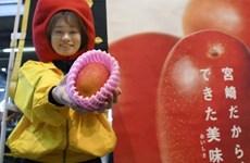 Nhật Bản: Hai quả xoài được bán với giá kỷ lục 4.488 USD