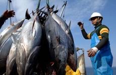 Nhật Bản hối thúc Hàn Quốc gỡ bỏ hạn chế nhập khẩu hải sản