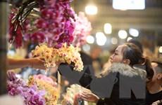 [Photo] Chợ hoa Quảng Bá nhộn nhịp trong những đêm cuối năm