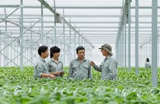 Vingroup hỗ trợ nông dân làm nông nghiệp sạch và an toàn