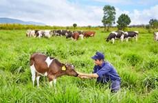 Vinamilk đạt chứng chỉ trang trại bò sữa Organic tiêu chuẩn