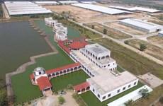 Vinamilk nhập khẩu hơn 2000 con bò sữa cao sản từ Mỹ
