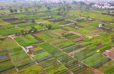 [Video] Về xã Tân Minh ngắm 'vựa' rau xanh nổi tiếng Hà Nội