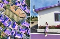 Đảo Tím mộng mơ - Địa điểm du lịch mới gây bão tại Hàn Quốc