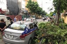 Hà Nội: Cành cây xà cừ lớn gãy, làm hỏng 3 xế hộp gần bệnh viện 108
