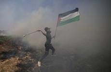 Mỹ chuẩn bị cho việc công bố một phần kế hoạch hòa bình Trung Đông