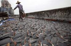 Canada trở thành nước G20 đầu tiên cấm xuất, nhập khẩu vây cá mập