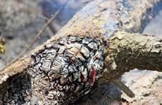 Nghệ An: Đám cháy rừng tại Nam Đàn được khống chế sau nhiều giờ