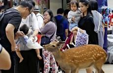 Nhật Bản: Hươu chết hàng loạt do nuốt phải túi nylon