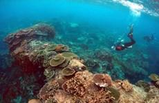 Các đảo đá ngầm ở Thái Bình Dương thích ứng tốt với thay đổi khí hậu