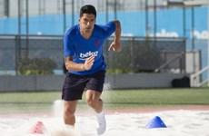Lo Griezmann chiếm chỗ, Luis Suarez sớm trở lại luyện tập