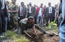 Ethiopia lập kỷ lục trồng hơn 200 triệu cây xanh trong một ngày