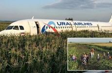 Video máy bay Nga phải đáp xuống cánh đồng vì chim chui vào động cơ