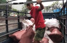 Bình Dương: Phát hiện lượng lớn thịt lợn bẩn cất giấu trong container
