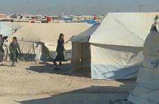 Australia lo ngại cho sự an toàn của các công dân tại Syria