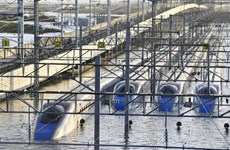 Nhật Bản: Hệ thống tàu cao tốc Shinkansen thiệt hại do bão Hagibis