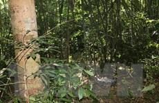 Bình Phước: Nam thanh niên tử vong nghi do trúng đạn khi đi săn