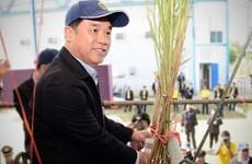 Thái Lan nỗ lực tìm cách phát triển ngành mía đường