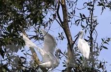Khám phá tiềm năng du lịch sinh thái rừng tràm Trà Sư