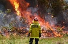 Australia: Tình nguyện viên chữa cháy lại cố tình gây cháy