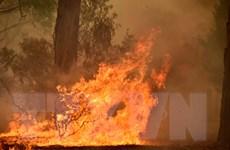 Australia nỗ lực tiếp cận hàng nghìn người bị mắc kẹt do cháy rừng