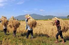 Campuchia: Dự định sẽ xuất khẩu 1 triệu tấn gạo trong năm 2020