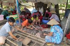 Năm Canh Tý ghé thăm chợ chuột đồng Phù Dật ở An Giang
