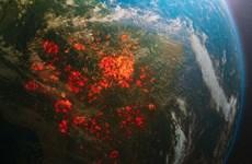 Diện tích rừng Amazon bị phá hủy tăng cao chóng mặt