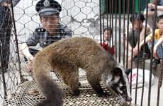 Trung Quốc thông qua quyết định cấm buôn bán động vật hoang dã
