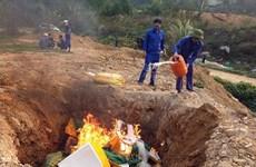 Lào Cai: Tiêu hủy hơn 1,2 tấn trứng gia cầm non đông lạnh nhập lậu