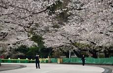 Nhật Bản cân nhắc mở cửa lại một số địa điểm công cộng