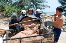 Ngư dân Quảng Nam phấn khởi do trúng đậm vụ ruốc biển