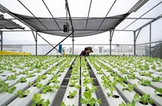 Singapore xây dựng nông trại trên nóc các toà nhà để xe