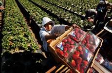 Mỹ lo ngại dịch bệnh bùng phát tại các cơ sở đóng gói thực phẩm