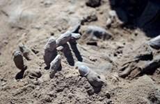 Phát hiện hố chôn tập thể chứa hàng chục thi thể ở Mexico