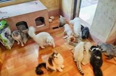 Quán càphê cứu hộ mèo ở Hà Nội gây chú ý trên báo Pháp